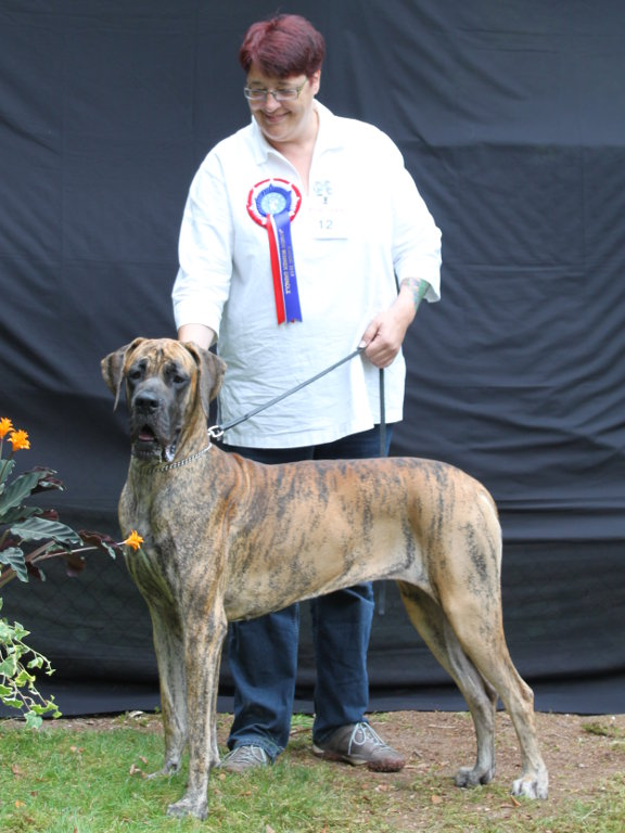sarı bedias Bamm-Bamm Rubble (EudDDC 2014 Junior Winner Brindle Female & Best Brindle Youth)